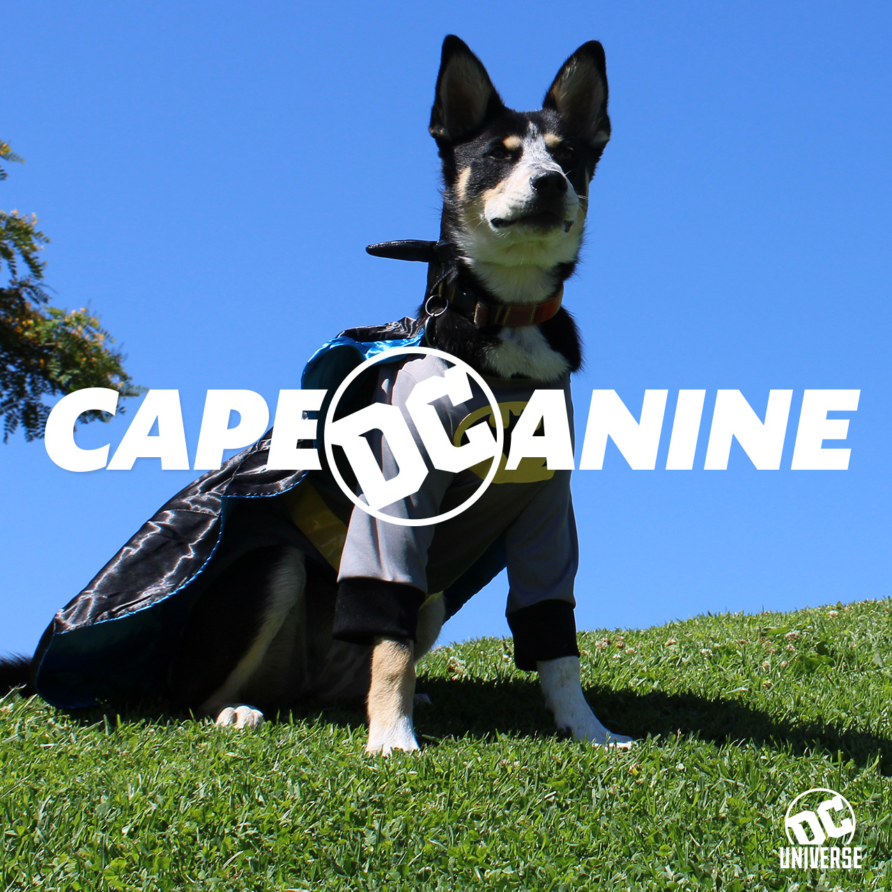 caped_canine.jpg